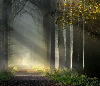 Spiritual-Journey1-350x300